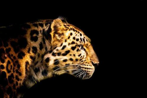 Animal Photography by Patrick Bouquet
