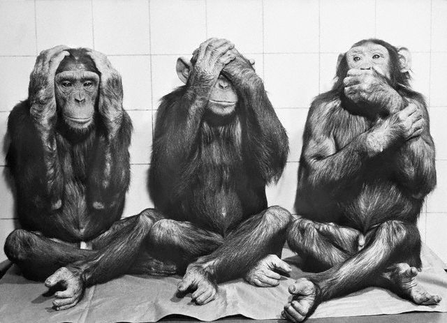 "naturalbornworldshakers:  ""HEAR NO EVIL, SEE NO EVIL, AND SPEAK NO EVIL."" 1958 - Chimpanzees at the Frankfurt, Germany zoo."