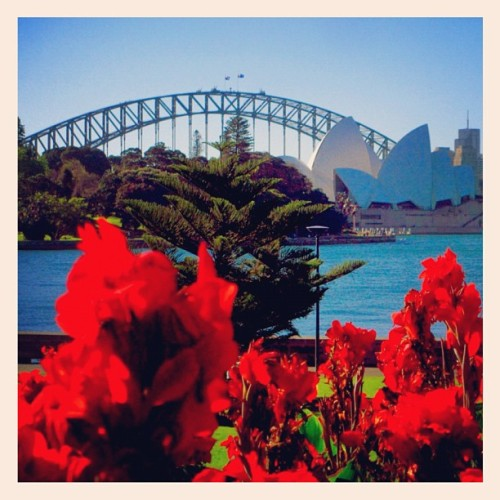 The Sydney Botanical Gardens with the Opera House and the Harbour Bridge in the background… One could easily spend an entire day just here… (Taken with Instagram)