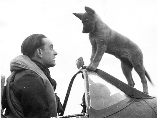 Czech Spitfire pilot of the RAF with a fluffy pup.