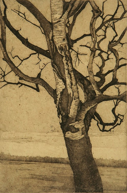 2headedsnake:  Anna McKee, Birch at Lake-1, etching, 12in by 8in, 2008
