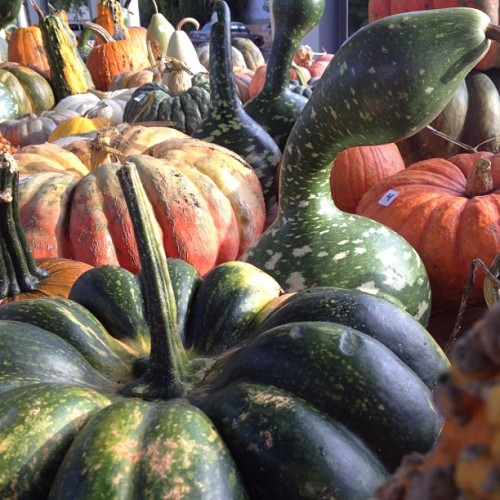 Texture. #harvest #localfood #squash #grandrapids (Taken with Instagram at Fulton Street Farmer's Market)