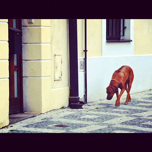 four legged stroll (Taken with Instagram)