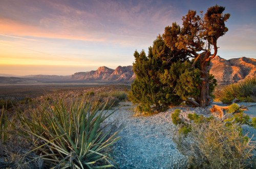 Red Rock Canyon was designated as Nevada's first National Conservation Area. Red Rock Canyon is located 17 miles west of the Las Vegas Strip on Charleston Boulevard/State Route 159. The area is 195,819 acres and is visited by more than one million people each year. In marked contrast to a town geared to entertainment and gaming, Red Rock Canyon offers enticements of a different nature including a 13-mile scenic drive, more than 30 miles of hiking trails, rock climbing, horseback riding, mountain biking, road biking, picnic areas, nature observing and visitor center with exhibit rooms and a book store.Photo: Van Phetsomphou