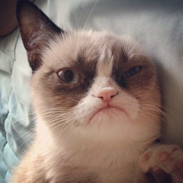 tardthegrumpycat:  Grumpy Cat trying to sleep. (Taken with Instagram)