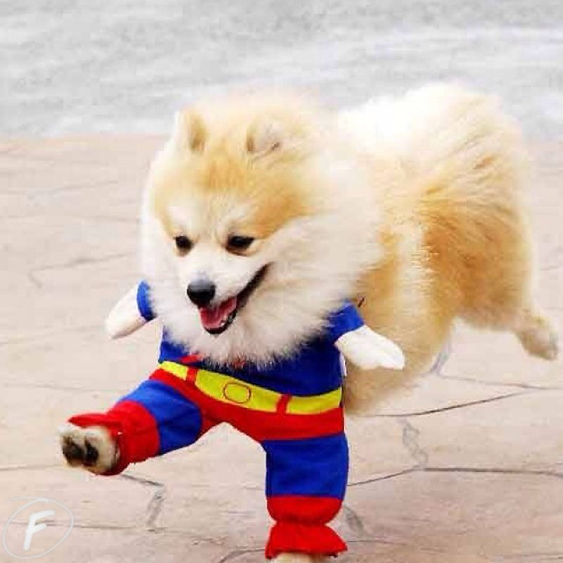 collegehumor:  Superpuppy is Here to Save Your Day And by save, we mean he'll poop on your floor and then fall asleep.