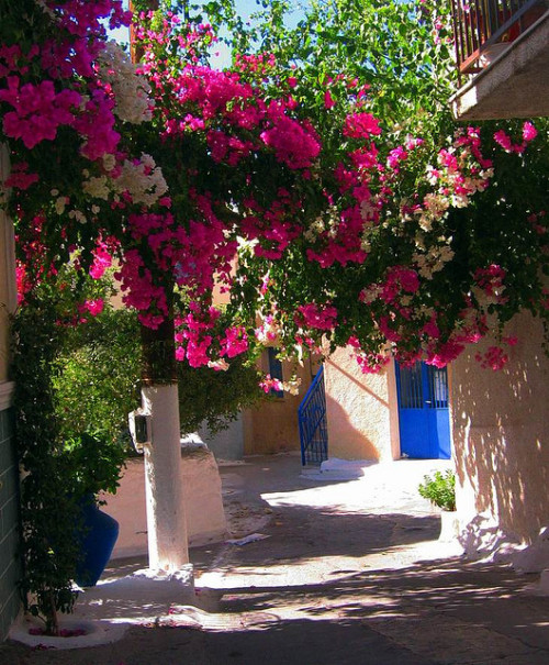 visitheworld:  Floral arch on the streets of Poros, Greece (by mamanian).