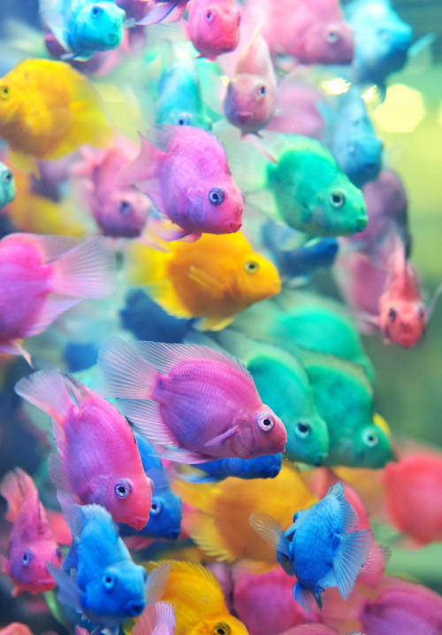 funnywildlife:  Colourful Fish!