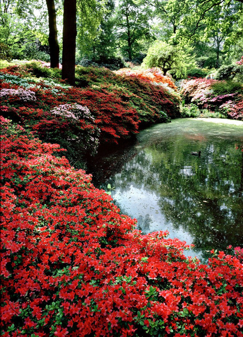 mosmelk:  \  Isabella Plantation, Richmond (by Howard Somerville)