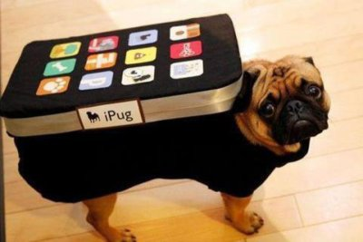collegehumor:  iPug First the baked pugtato, now the iPug, what's next, my DIGNITY?!  NO! Your DOG-NITY! Get with the puns College Humor!