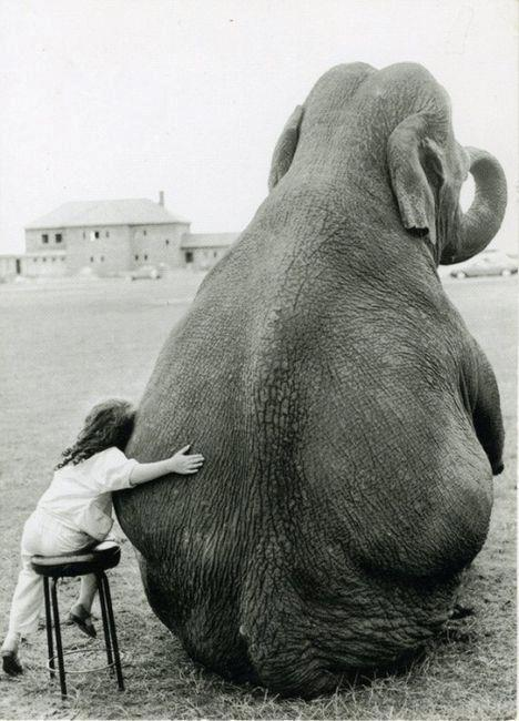 (via Elephant Got a Hug)