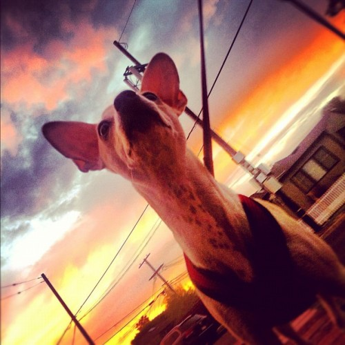 Epic Freddy Venice Sunset. #mydogistheshit  #sunset #dog #venice (Taken with Instagram at ChalkLA)
