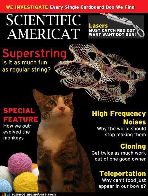 sblaufuss:  jtotheizzoe:  Superstring! Must catch red dot! I die from the laughs.  WE INVESTIGATE Every Single Cardboard Box We Find  It's fun when you see things that your friends made appear on unrelated friend's blogs!