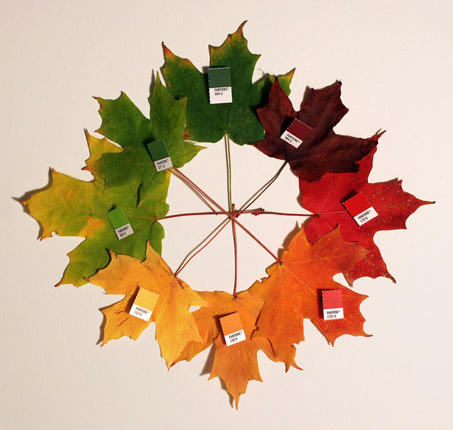 Pantone Autumn (maple leaves arranged in spectrum order and matched with Pantone color swatches by Chris Glass)