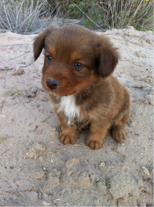 samlilly13:  The puppy that I found with I was riding on my horse. His new name is Sir George Cutes-alot
