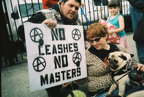 pugwizard:  NO LEASHES, NO MASTERS.  !!