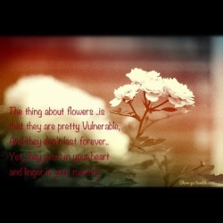 #flowers #quote #forever  (Taken with Instagram)
