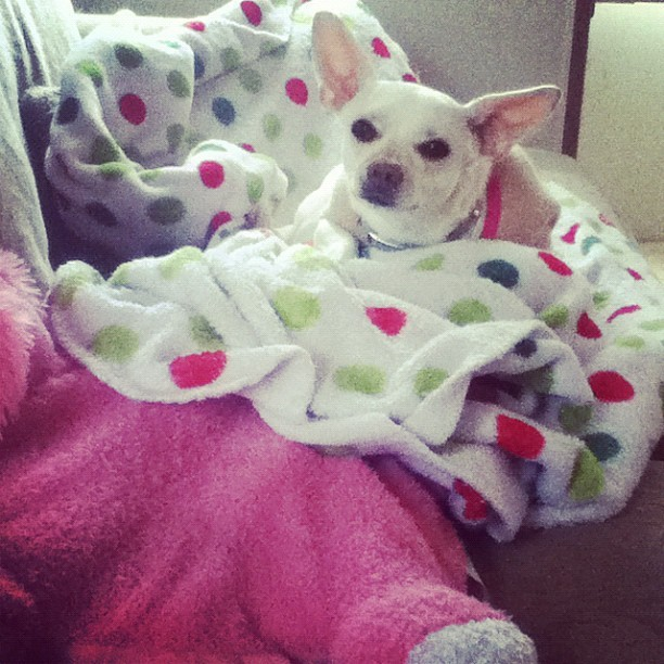 Lady baby snuggled up!!! She don't like to be cold!!! (Taken with Instagram)