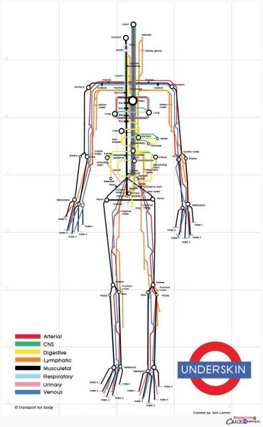 explore-blog:  So clever – the human body visualized as a subway map by designer Sam Loman, a fine addition to these visual metaphors using he London Tube map. Also see these vintage illustrations envisioning the body as a machine.