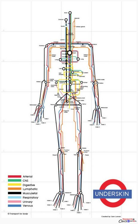 explore-blog:  So clever – the human body visualized as a subway map by designer Sam Loman, a fine addition to these visual metaphors using he London Tube map. Also see these vintage illustrations envisioning the body as a machine.  HELLO there
