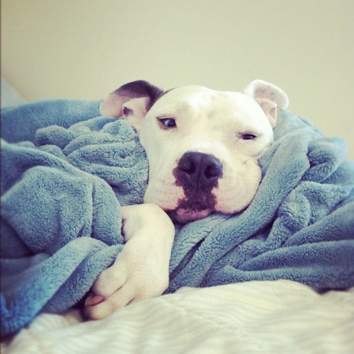 kaylarendall:  Snuggled up handsome boy! (Taken with Instagram)