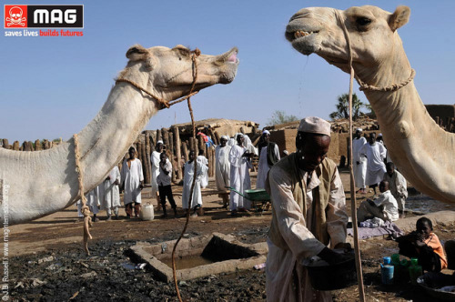 Pic of the Day: Men from the Beja tribe water their camels in the Sudanese town of Hamesh Koreb on Flickr.Via Flickr: MAG has cleared 2.15 million square metres of land in Sudan since 2010. Land cleared of landmines and unexploded ordnance can not only be used by communities for farming and housing, but it also enables development agencies and local government to access areas to provide basic services such as health and education.www.maginternational.org