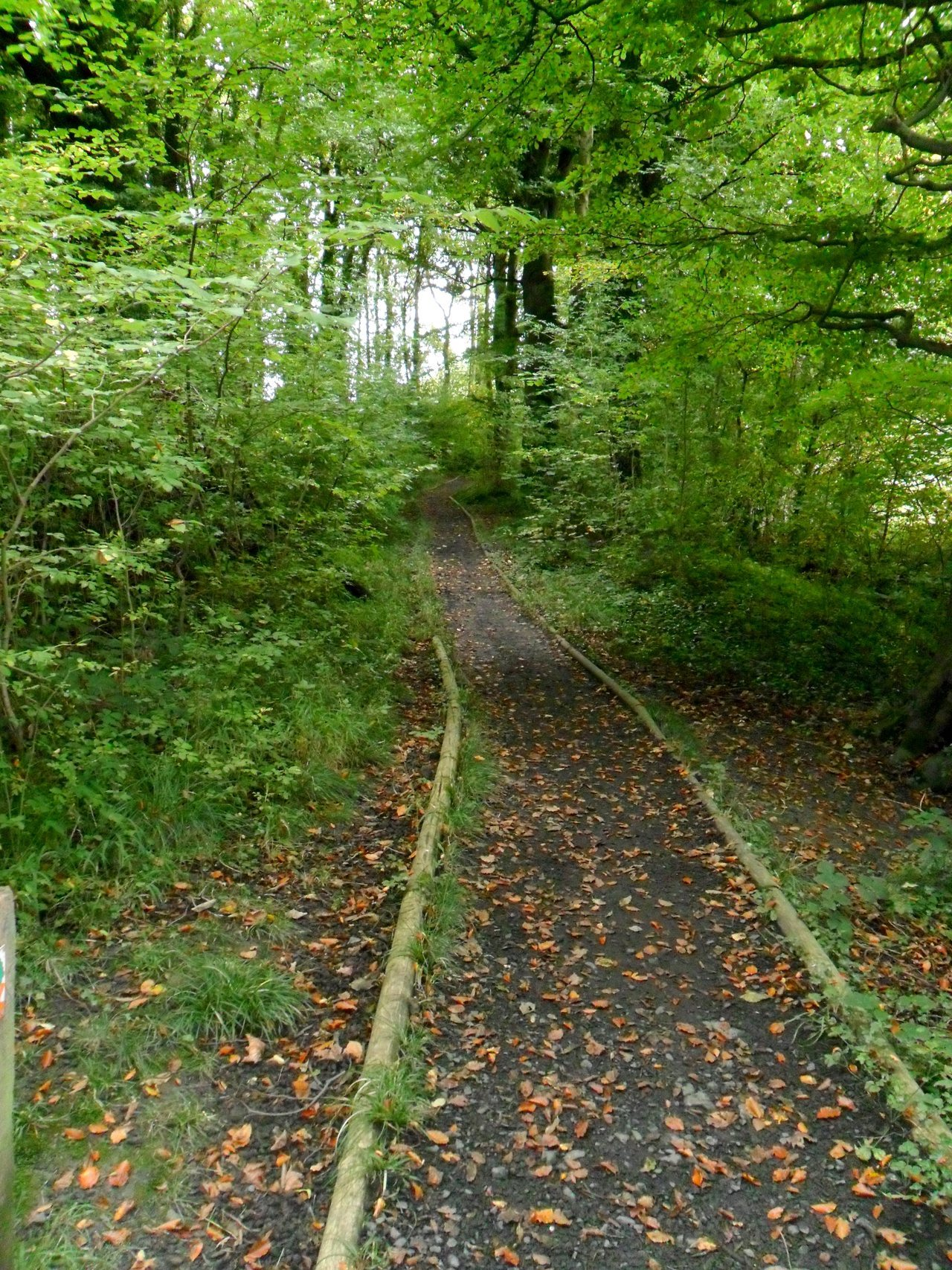 Footpath in The Dingle woods, Aldridge, Walsall, England.