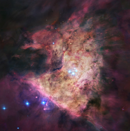At the heart of the Orion Nebula, are four hot, massive stars known as the Trapezium. Gathered within a region about 1.5 light-years in radius, they dominate the core of the dense Orion Nebula Star Cluster.