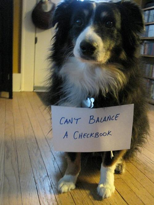 dogshaming:  Can't balance a checkbook. Ed. Note: you and me both, dog.