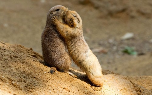 Prairie Dogs are unafraid to express emotion.
