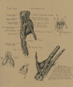jimmysketchbook:  Study of the right hand… this page was a lot of fun. I plan to do a lot more stuff like this.
