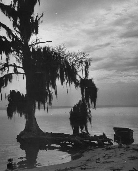 oldflorida:  It's quiet in Jacksonville, 1953.