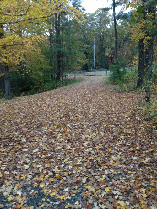 Follow the Yellow Brick Road. That's what the driveway looked like this morning. I like where I live a LOT.