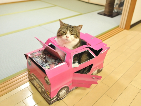 """Hey Maru, the pink car looks nice on you!"""