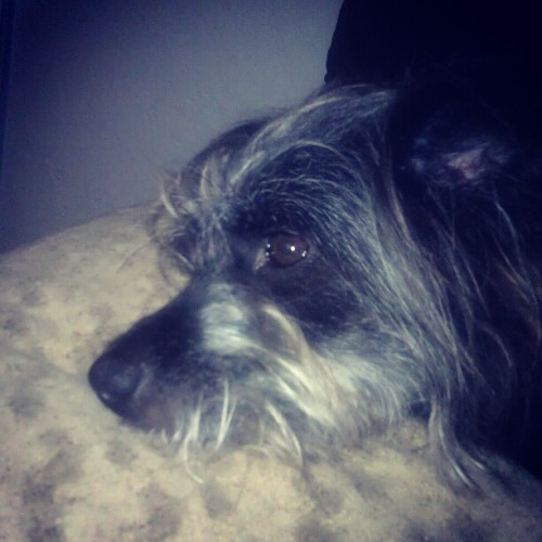 Sleepy #Stormy  #dog (Taken with Instagram)