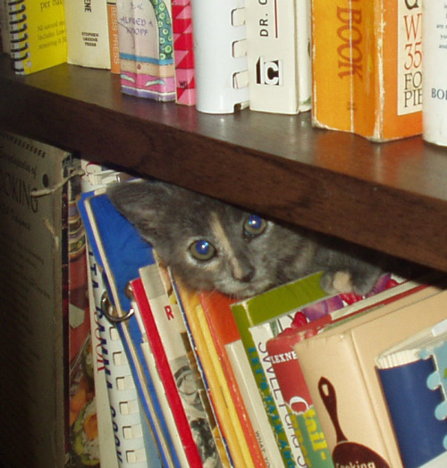for a cat named clove, she sure likes cookbooks