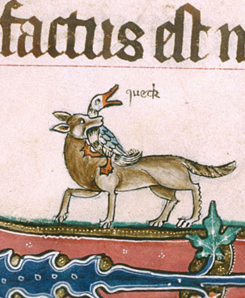 demonagerie:  British Library, Add 49622, f. 190v. The Gorleston Psalter. 1310-1324  I'm gonna be the fox today. I'm gonna make it happen.
