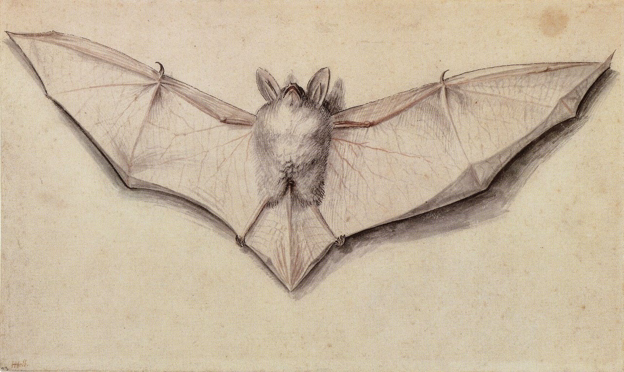 poisonwasthecure:  Study of a Bat Hans Holbein the Younger 1523