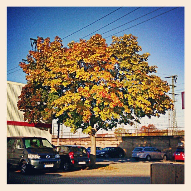 Huh, the weather got noticeably colder, this tree changed color literally over night, my insomnia has kicked it up into overdrive, startinng day 4 almost no sleep whatsoever and my tinnitus (ringing ears) is unavoidable now… Thought I had another 30 years before changes in seasons would affect me. (Taken with Instagram at Tunnelstraße)