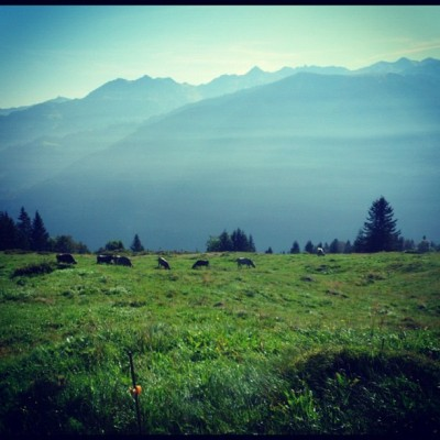 #alm #switzerland #swiss #mountain #mountains #grass #sky #blue #green#photooftheday #picoftheday #instagold #instagood #jj #jj_forum #instadaily #all_shots #instagramhub #statigram #webstagram #instagain #instaaaaah #igdaily #ignation #ig #instagram #igaddict (Wurde mit Instagram aufgenommen)
