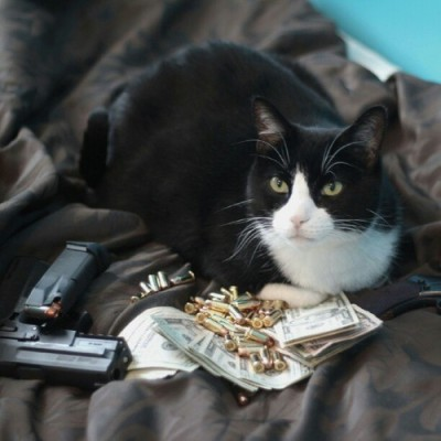 Bullets, guns and cash cats. #richcatsofinstagram by imaxorz