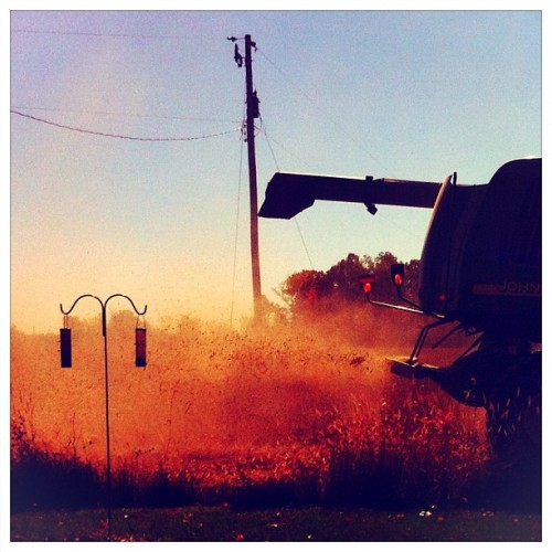 The combine harvests the beans. #rural #ohio #iphone #iphoneography #fields #crops #fall #autumn #snapseed #procamera #magichour  (Taken with Instagram)
