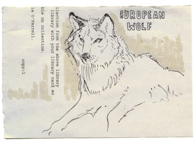 European Wolf By Akbar Ali A drawing I did at work when I got bored.