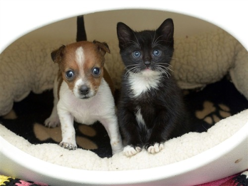 newsweek:  This is a kitten and that is a puppy and these two think they are sisters.  Aborableness EXPLOSION! (I warned you…)