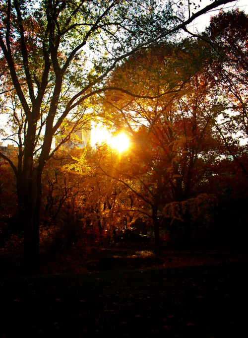 "Autumn sunset. Central Park, New York City.  In autumn, sun drips down like melted gold on tree limbs decorated in the finest foliage.   The earth, chilled by the memory of winter, holds onto the sun's light with hands outstretched as each ray slips through its fingers like fine sand.  As bitingly cool air brushes past flushed faces, every bit of sunlight clings to the earth like embers fallen from a powerful fire.   —-  I love the brisk quality of light in the autumn especially in the evenings. It's as if the sun is trying to penetrate through past winter all the way forward into spring.  —-  View this photo larger and on black on my Google Plus page  —-  Buy ""Autumn Light Through Trees - Central Park - New York City"" Prints here, email me, or ask for help."