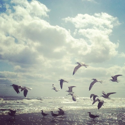 Mid morning jog  #beach #seagulls #ocean (Taken with Instagram)