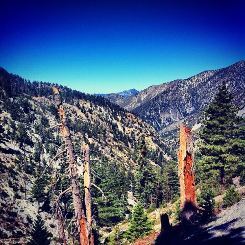 icehouse canyon #mountains  #hiking #angelesnationalforest #california #iphone #eddyizm #outdoors #trees #forest  (Taken with Instagram)