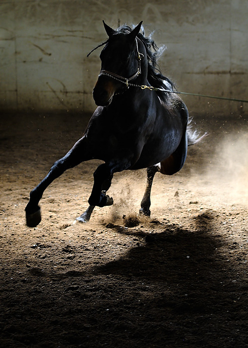 ~horse~ / click for more