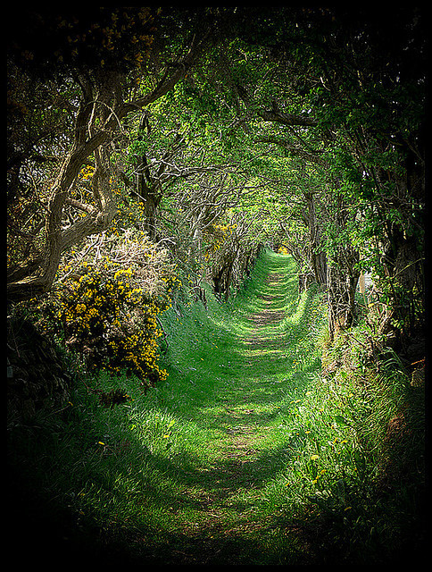 landscapelifescape:  Tree tunnel. Ballynoe, Co Down, Ireland  Sunsurfer