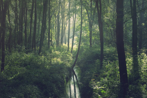 isawatree:  Stepping in Silence by ~Dahud